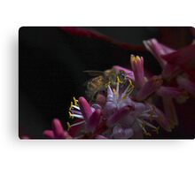 B obscure  Canvas Print