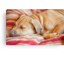 Let sleeping dogs lie.... Canvas Print