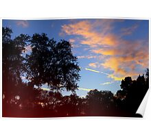Dark trees at sunset Poster