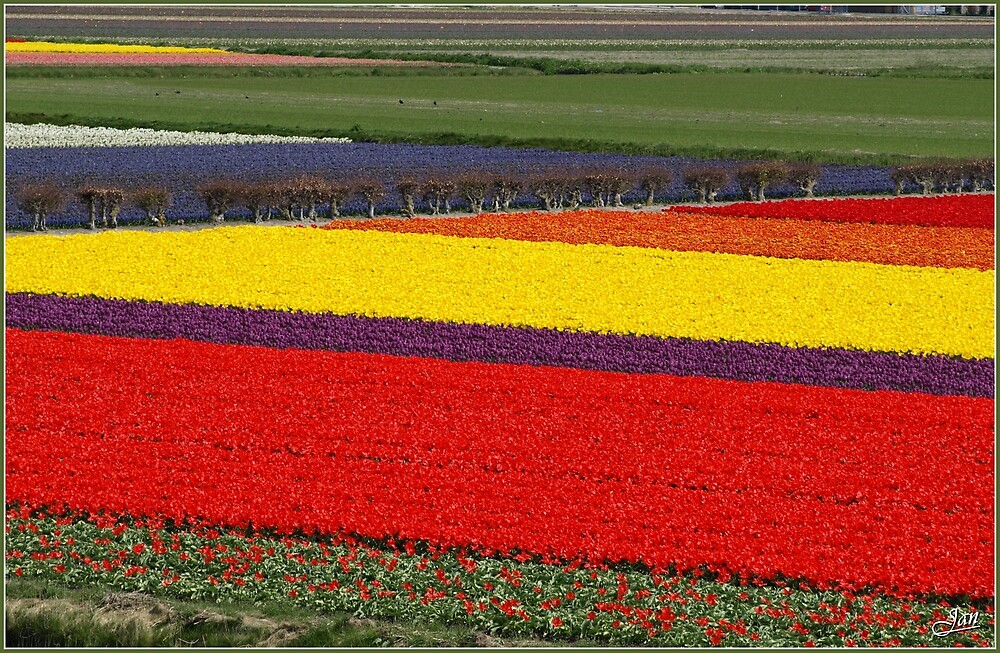 Flower Carpet by Janone