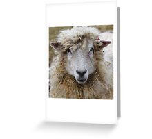No!! What Hay?? Greeting Card