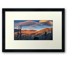 The Burnt Forest Framed Print