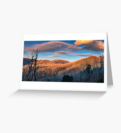 The Burnt Forest Greeting Card