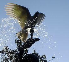 Cockatoo on a fountain (2) by LeJour