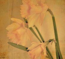Daffodil by Nadeesha Jayamanne