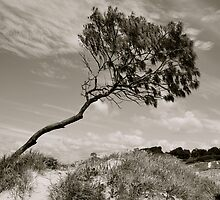 Wind Swept by pictureit