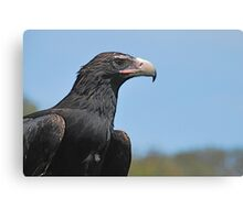 Regal Raptor Canvas Print