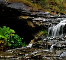 The Trickle Down  by pictureit