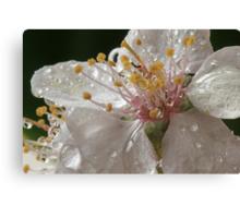 Oranamental Plum Blossom Canvas Print