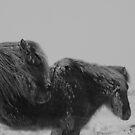 Icelandic horses. by jonpalma