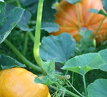Pumpkins by decorartuk