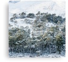 Forest after snowstorm Canvas Print