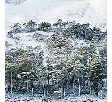 Forest after snowstorm Photographic Print