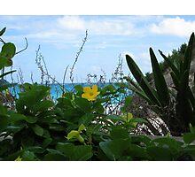 Beach Flower Photographic Print