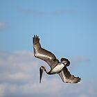 Pelican Dive by Dani Gee Phokus & [x]Pose