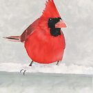 Red Cardinal Bird Print by cathy savels