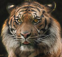 To kiss a Tiger :-) by John44