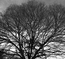 Naked Tree by Matthew Eakin