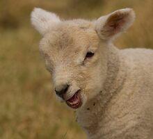 little lamb by Jon Lees