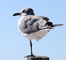 Seagull by AuntDot