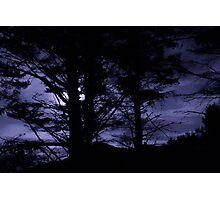Moon Night Trees Sky Photographic Print