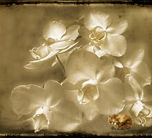 Cream-colored orchids and whiskers on kittens ... by © Kira Bodensted