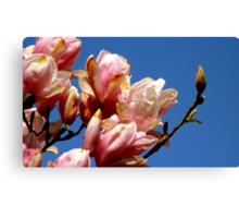 Looking UP at a Tulip Tree Canvas Print