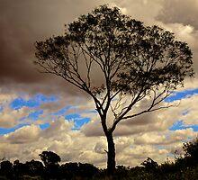 Loney Tree by D-GaP