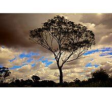 Loney Tree Photographic Print