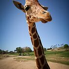 Giraffe by LawrencePhoto