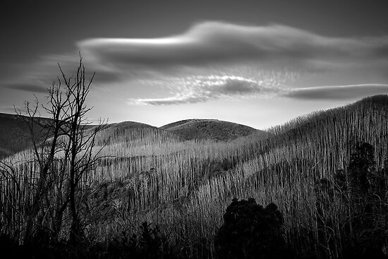 Gums of Grey by Mark  Lucey