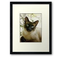 SUSHI - MELT MY HEART Framed Print