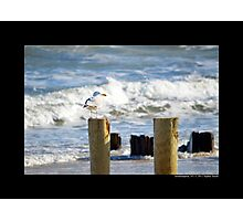 Seagull At The Atlantic Ocean Beach - Southampton, New York Photographic Print