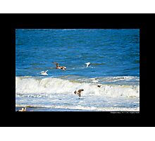 Seagulls By The Sea - Hampton Bays, New York  Photographic Print