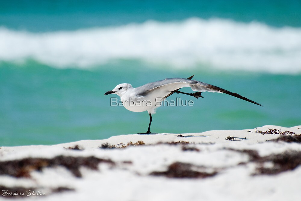 Beach Yoga - 1st Pose by Barbara Shallue