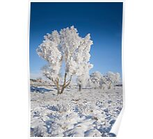 Winter Magic - Rannoch Moor Scotland Poster
