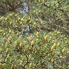 spring in the pine forest by parisiansamurai