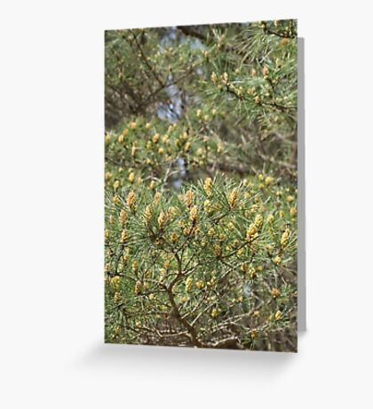 spring in the pine forest Greeting Card