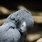 African Grey Parrot by Ladymoose