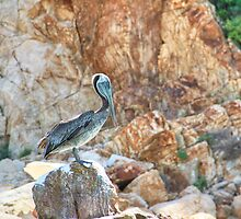 Lonely wild brown pelican HDR by Eti Reid