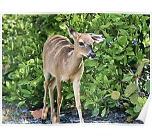 Key Deer Cuteness Poster