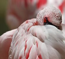 pink flamingo II by Christopher Jenkins