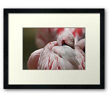 pink flamingo II Framed Print