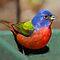 Colorful Birds - Quick Challenge