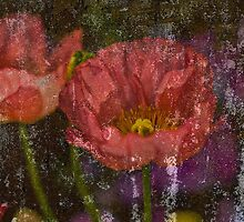 Poppies in Grunge by Dawn Crouse