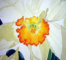 BEAUTIFUL DAFFODIL by jyoti kumar