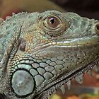 Green Iguana 01 by Magic-Moments