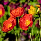 Poppies in the Garden by Dawn Crouse
