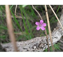 Zen Flower Photographic Print