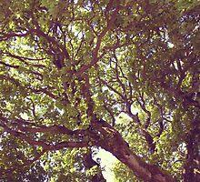 Summer Tree by Mark Minas